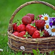 Strawberry Picking in May for National Strawberry Month + 5 Healthy and Delicious Strawberry Recipes
