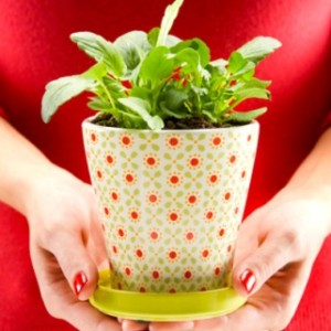 7 Household Plants to Soothe Your Health & Beauty Woes