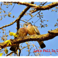 Birds: A Unique Take on Valentine's Day & the Season of Love