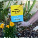 bee-friendlier-seeds