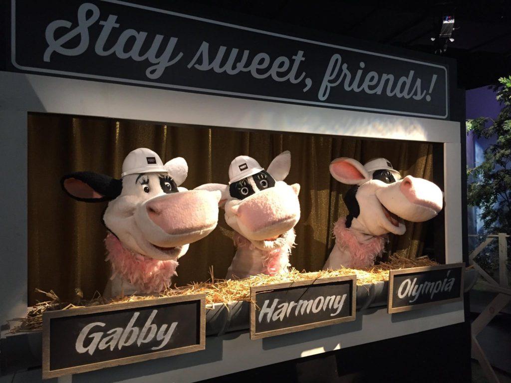 cows-hershey-park