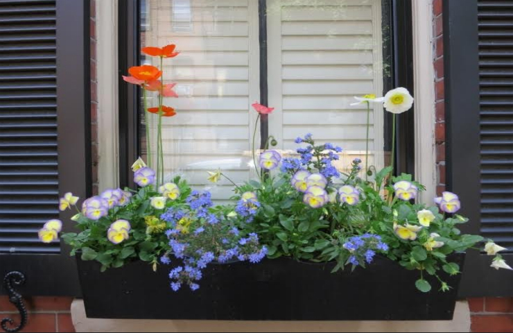 Tips to Quickly Spruce Up Your Home's Outdoor Areas Today