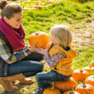 Pumpkin Patches in Metro DC and Maryland