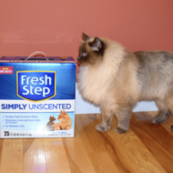 October 29 is National Cat Day: Celebrate with Fresh Step® Litter #CatLuv Campaign