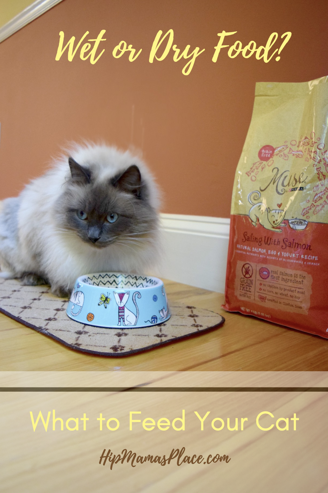 Wet or dry food? What you should feed your cat
