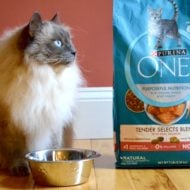 "Take Your Pet from ""Good"" to ""Great"" with Purina ONE® 28-Day Challenge"