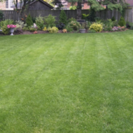 Tips for Hiring a Lawn Care Service in North Virginia