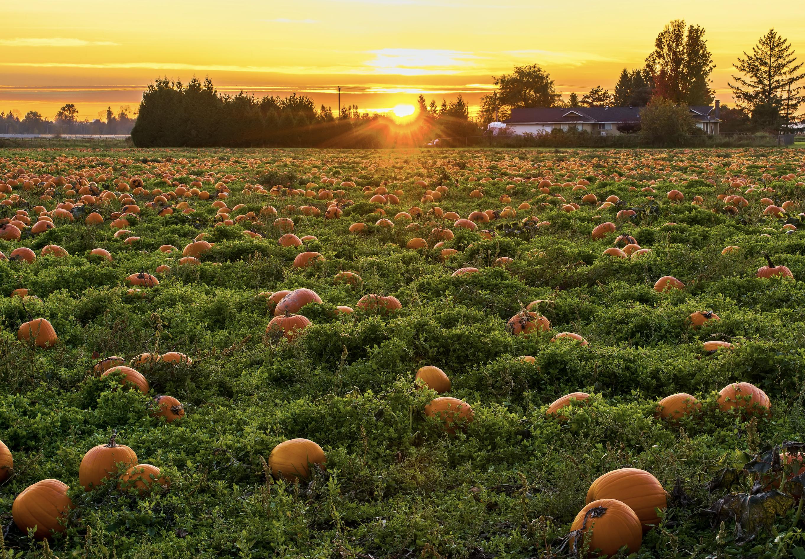 Pumpkin patch and S'mores Caramel Popcorn recipe
